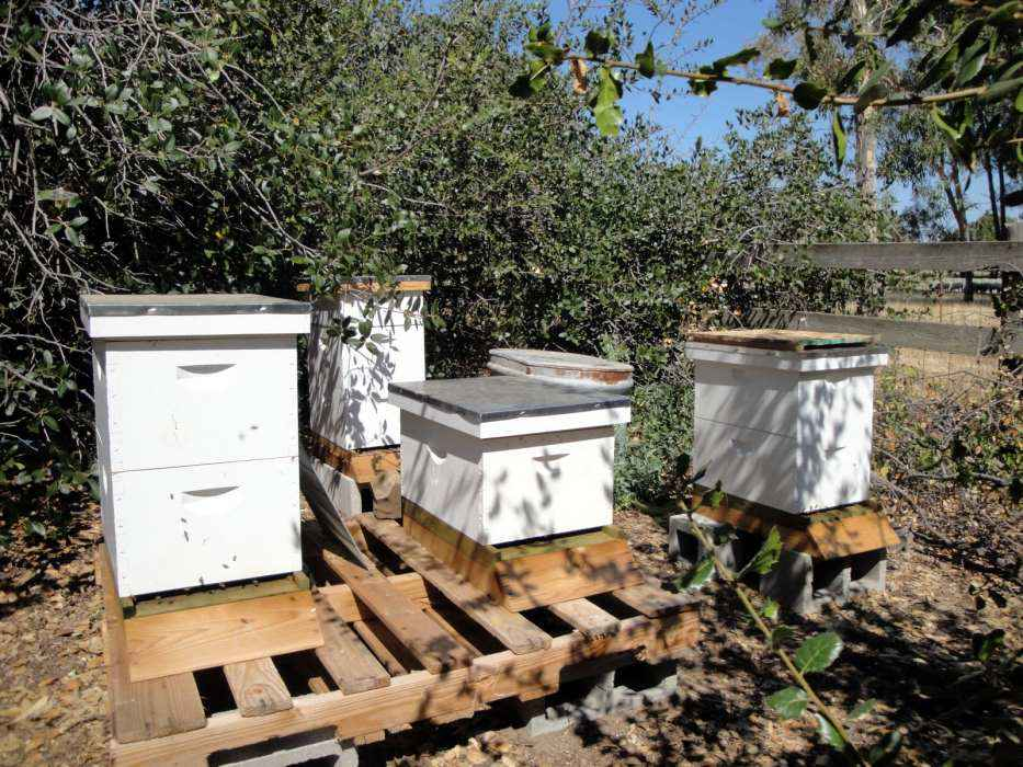 Bee Hive Placement Selecting a Sunny Shady Spot